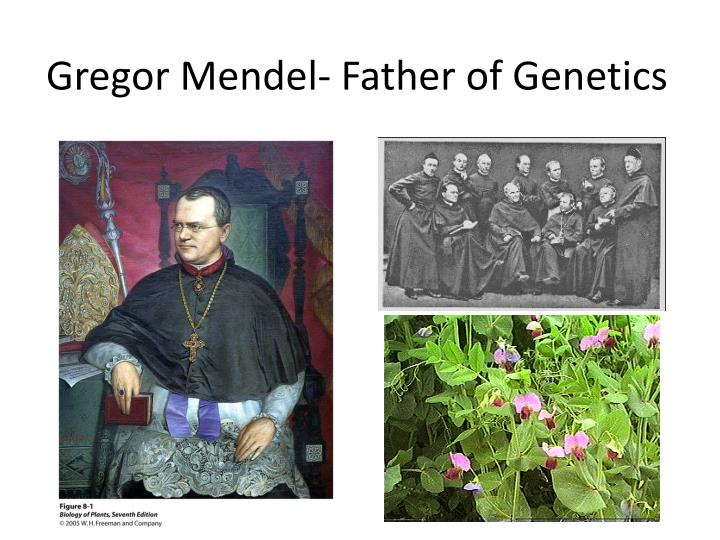 gregor mendel the father of genetics Gregor mendel, the father of genetics, and charles darwin, the father of modern evolution, were contemporaries at the same time that darwin was claiming that creatures could change into other creatures, mendel was showing that even individual characteristics remain constant.