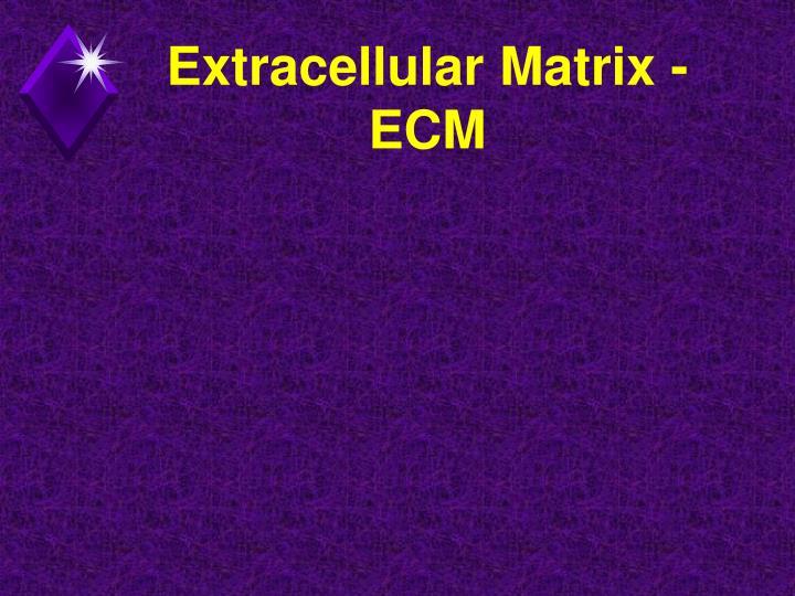 Extracellular Matrix - ECM