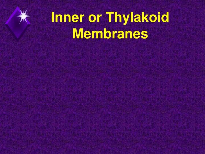 Inner or Thylakoid Membranes