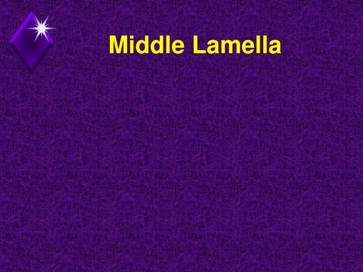 Middle Lamella