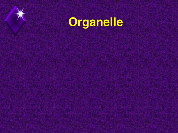 Organelle