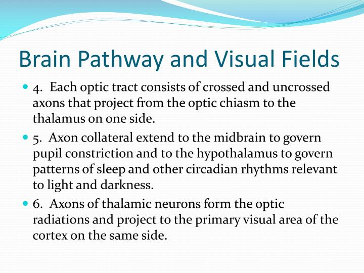 Brain Pathway and Visual Fields