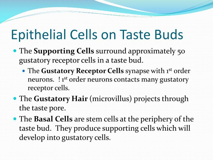 Epithelial Cells on Taste Buds