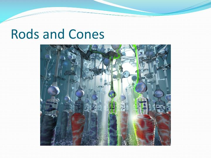 Rods and Cones