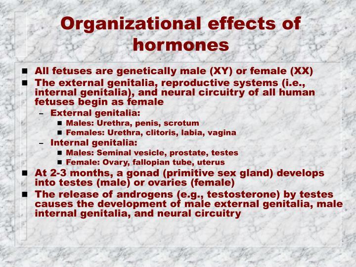 Organizational effects of hormones