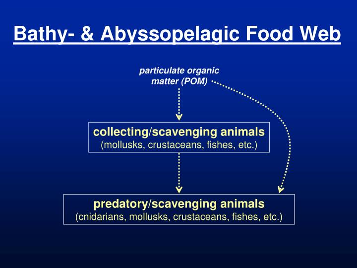 Bathy- & Abyssopelagic Food Web