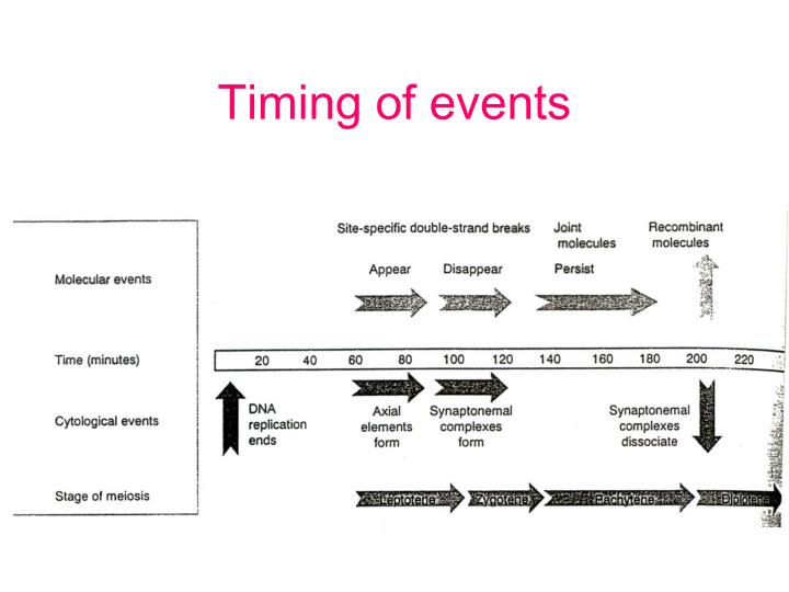 Timing of events