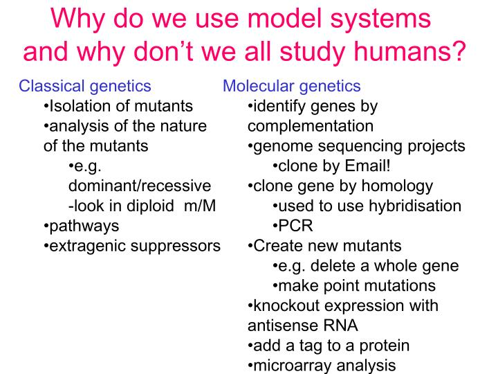 Why do we use model systems