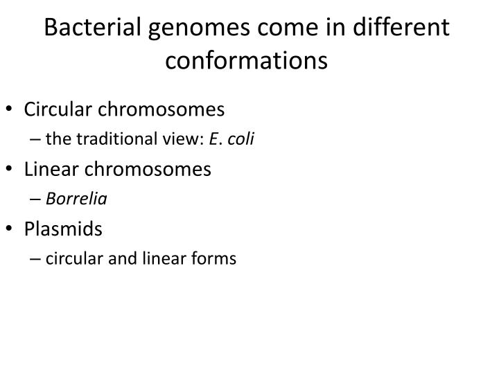 Bacterial genomes come in different conformations