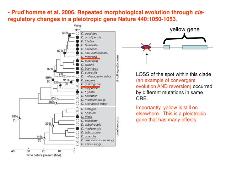 - Prud'homme et al. 2006. Repeated morphological evolution through