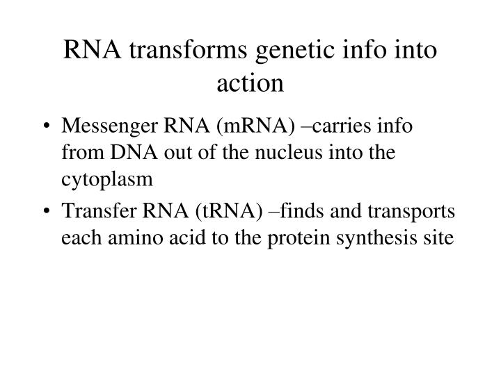 RNA transforms genetic info into action