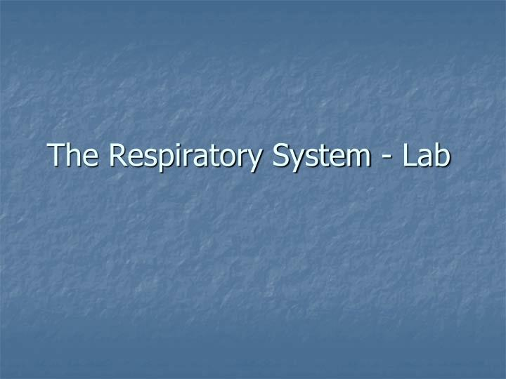 the respiratory system lab n.