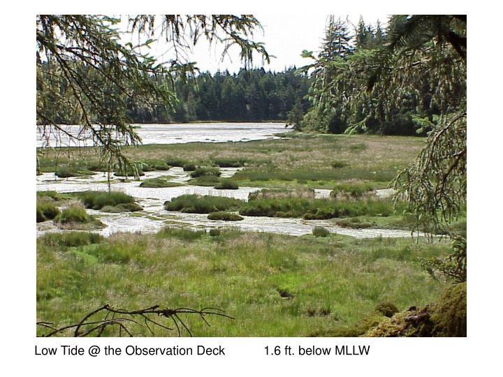 Low Tide @ the Observation Deck           1.6 ft. below MLLW