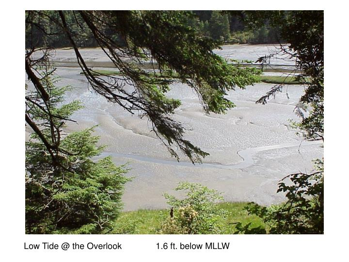 Low Tide @ the Overlook              1.6 ft. below MLLW
