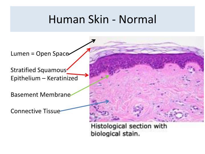 Human skin normal