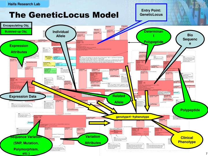 Entry Point: GeneticLocus