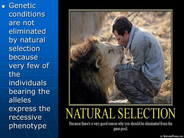 Genetic conditions are not eliminated by natural selection because very few of the individuals bearing the alleles express the recessive phenotype