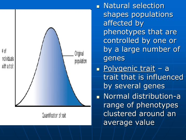 Natural selection shapes populations affected by phenotypes that are controlled by one or by a large number of genes