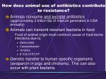 how does animal use of antibiotics contribute to resistance