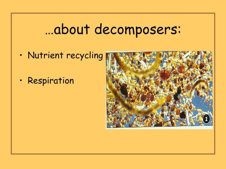 …about decomposers: