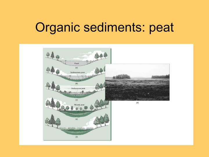 Organic sediments: peat