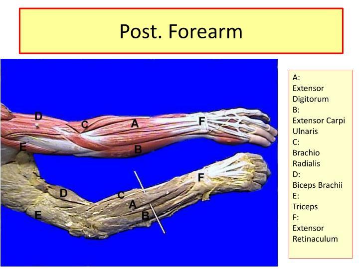 Post forearm