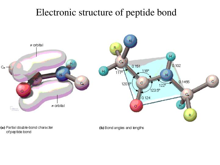 Electronic structure of peptide bond