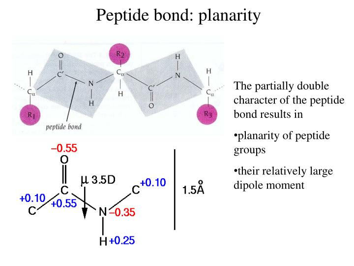 Peptide bond: planarity