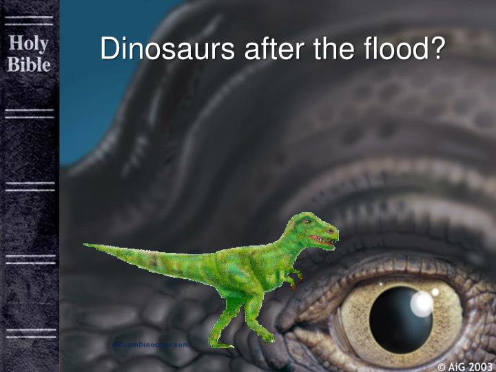 Dinosaurs after the flood