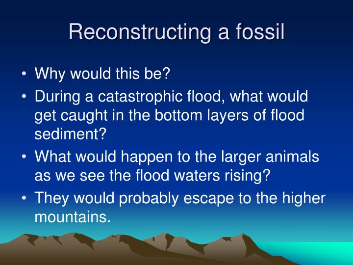 Reconstructing a fossil