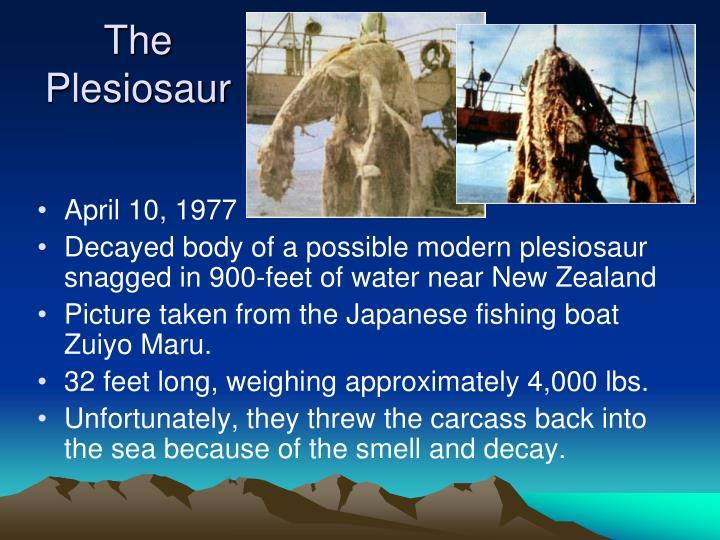 The Plesiosaur