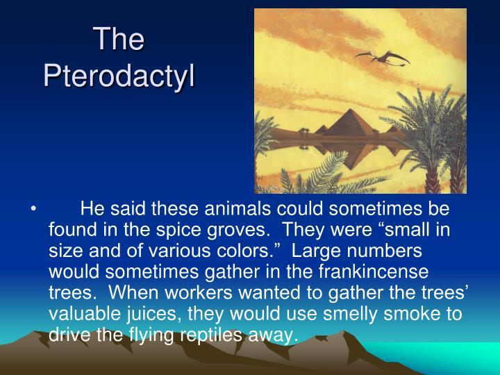 The Pterodactyl
