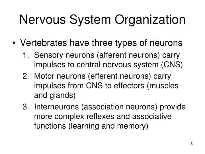 Nervous system organization1