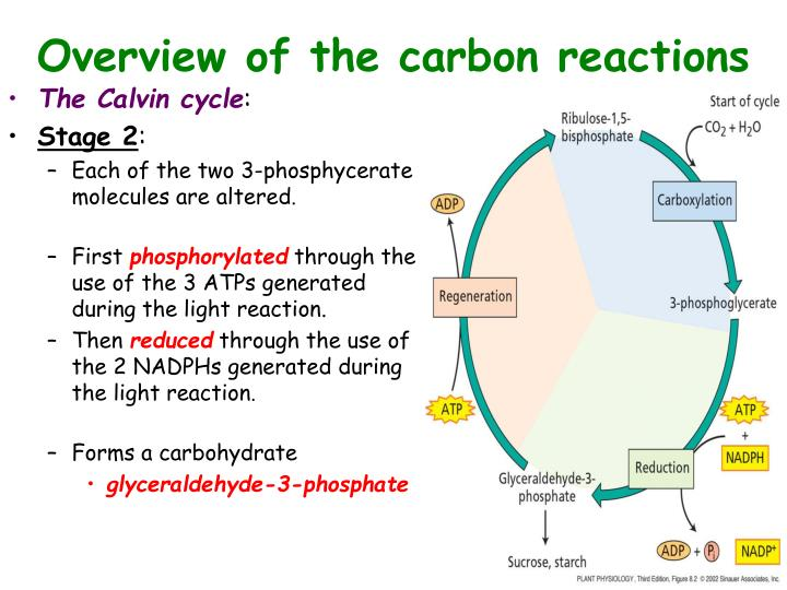 Overview of the carbon reactions