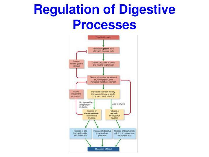 Regulation of Digestive Processes