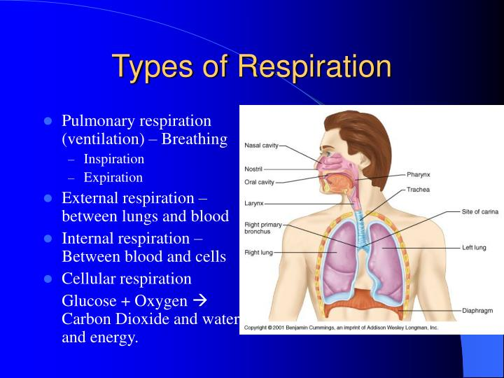 Types Of Respiration N