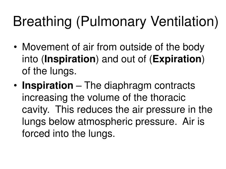 Breathing (Pulmonary Ventilation)