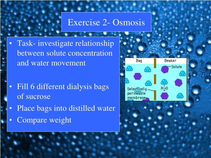 osmosis various sucrose concentrations Osmosis when two solutions with different solute concentrations are separated by a semipermeable membrane there will be a _____ movement of water from the solution with the _____ solute concentration to the solution with the _____ solute concentration to, or attempt to, equalize the concentrations on either side of the membrane.