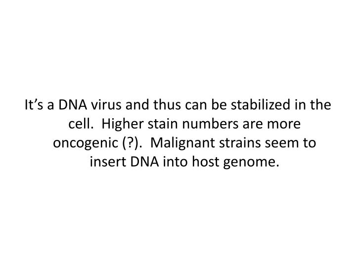 It's a DNA virus and thus can be stabilized in the cell.  Higher stain numbers are more oncogenic (?).  Malignant strains seem to insert DNA into host genome.