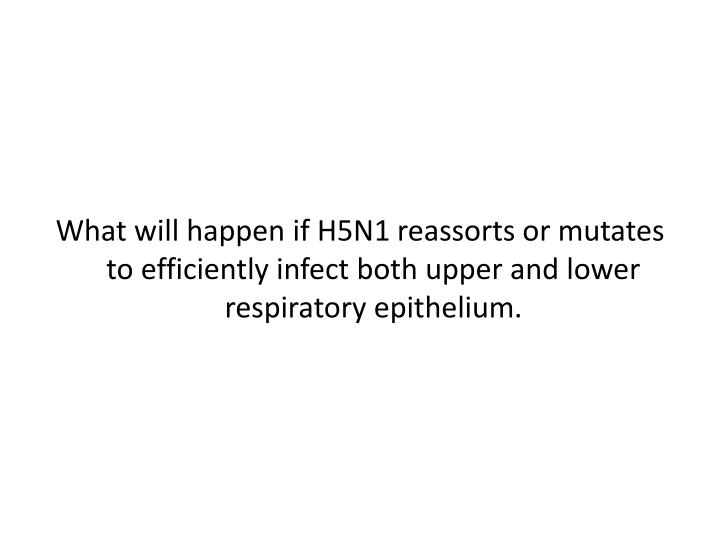 What will happen if H5N1