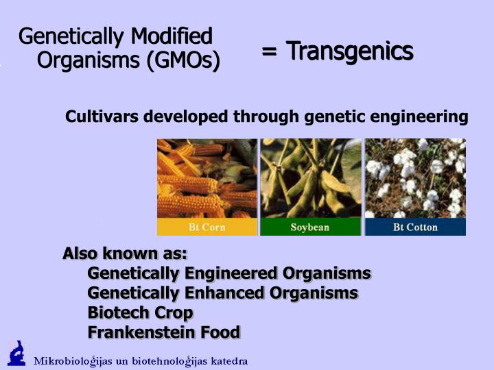 the harm of genetically modified organisms Genetically modified organisms are organisms whose normal growth has been interfered with, due to an act of genetic engineering, in which the genes have intentionally been changed or transferred from one organism to another so as to enable the receiving organism to exhibit certain desirable characteristics or traits.