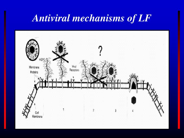 Antiviral mechanisms of LF