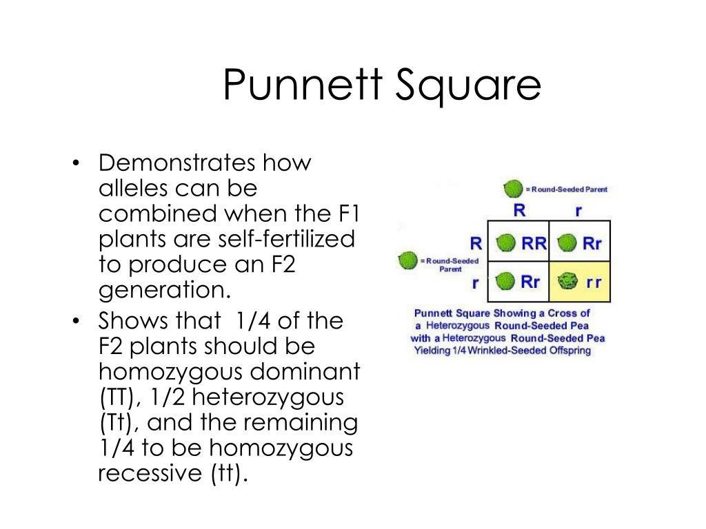 Fertilization Punnett Square Diagram Automotive Wiring Ppt Powerpoint Presentation Id 1713251 Rh Slideserve Com Blank Flower