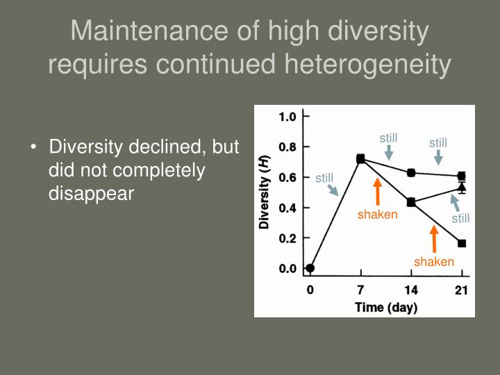 Maintenance of high diversity requires continued heterogeneity