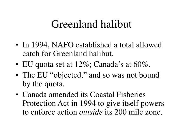 Greenland halibut