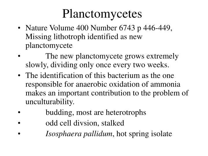Planctomycetes