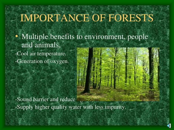 important of forest