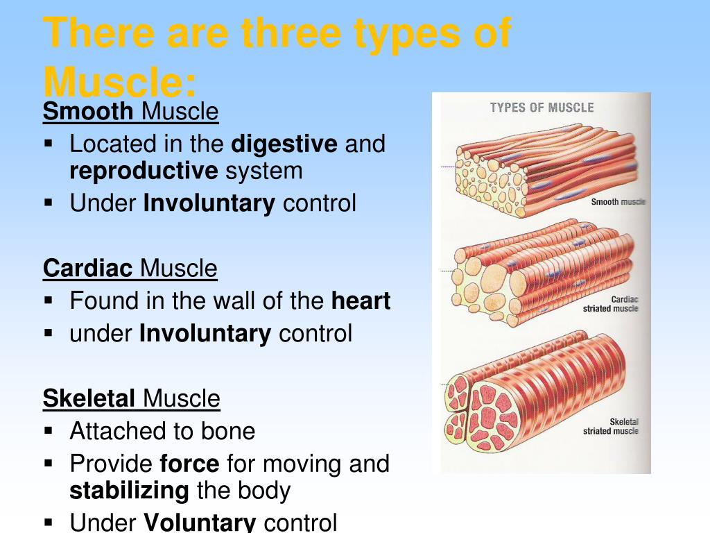 PPT - Body Systems and Common Diseases and Conditions ...