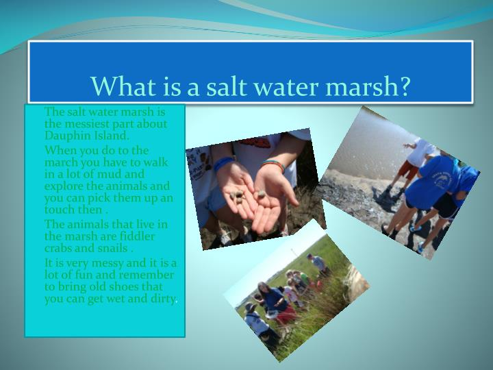 What is a salt water marsh?