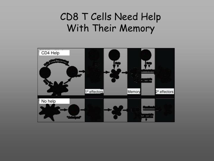 CD8 T Cells Need Help